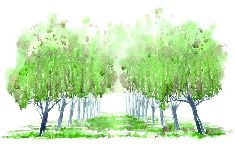 Aleia da árvore decíduo ilustração stock