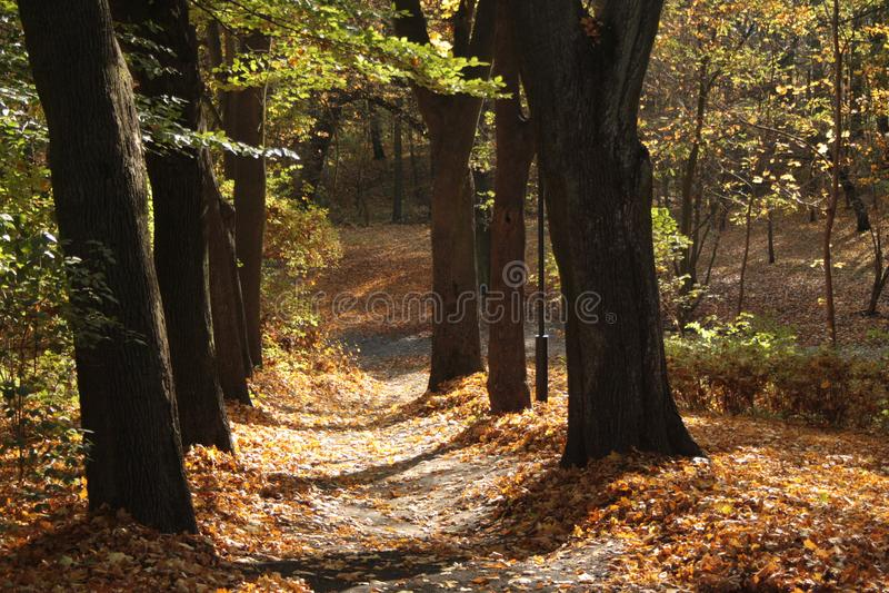 Aleia da árvore em um parque do outono imagens de stock royalty free