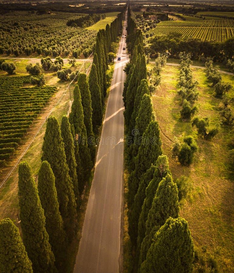 Aleia de Cypress com estrada secundária rural, Toscânia imagem de stock