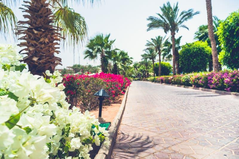 Aleia de passeio com palmas e as flores coloridas imagens de stock royalty free