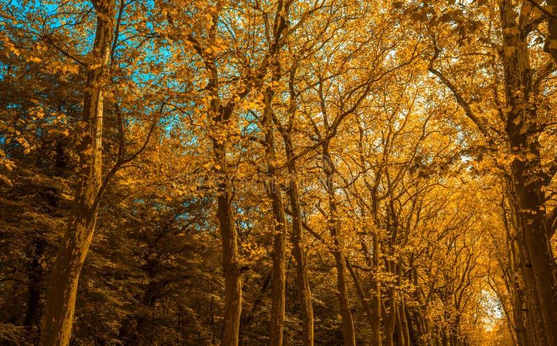 Aleia do parque com as árvores na cor do outono fotos de stock royalty free
