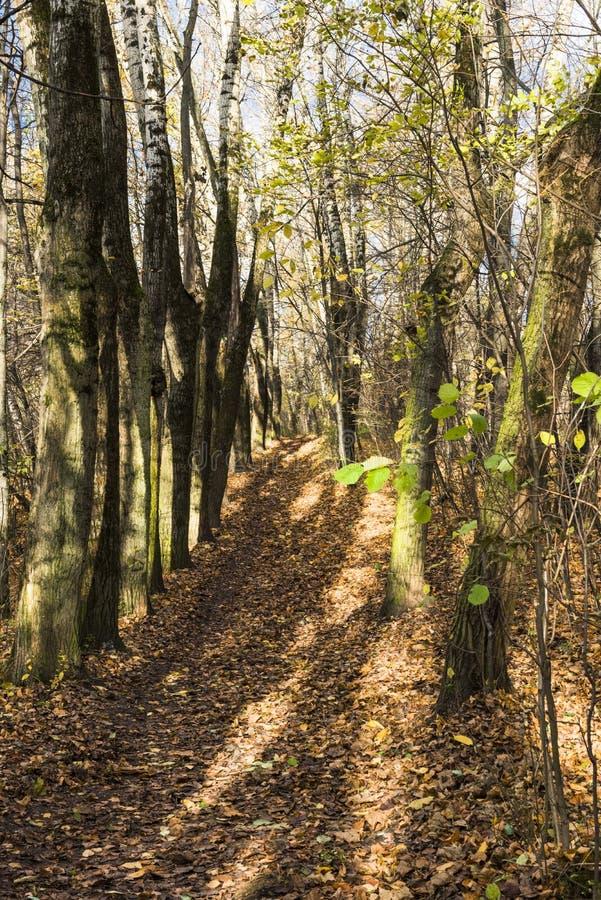 A aleia leve sol do parque do outono imagem de stock