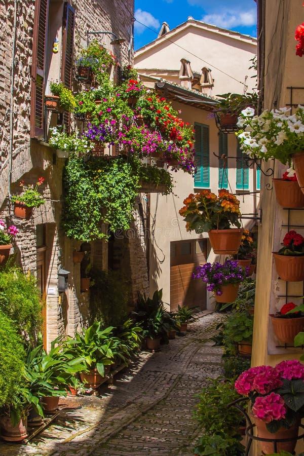 Aleia maravilhosa e romântica com flores, Spello fotografia de stock royalty free