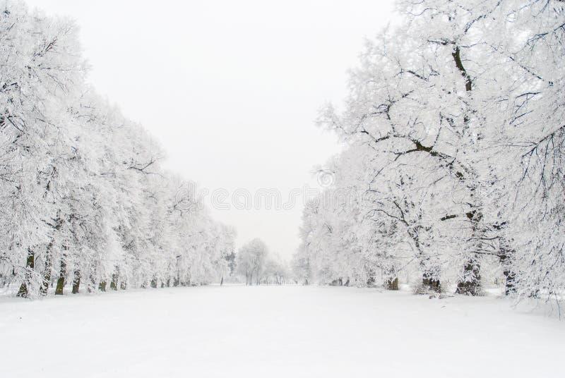 Aleia nevado foto de stock