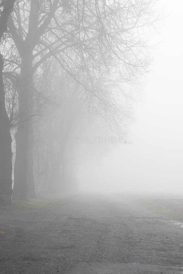 Aleia nevoenta do outono imagem de stock