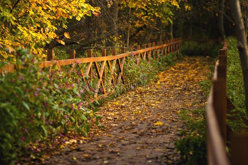 Aleia no parque do outono através de uma ponte de madeira com trilhos fotografia de stock