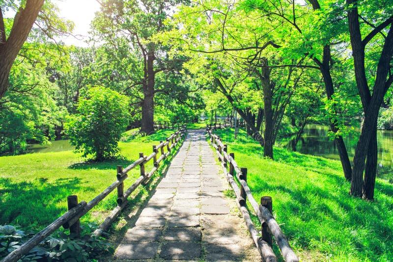 Aleia no parque verde no dia de verão ensolarado O passeio através da floresta bonita fotografia de stock