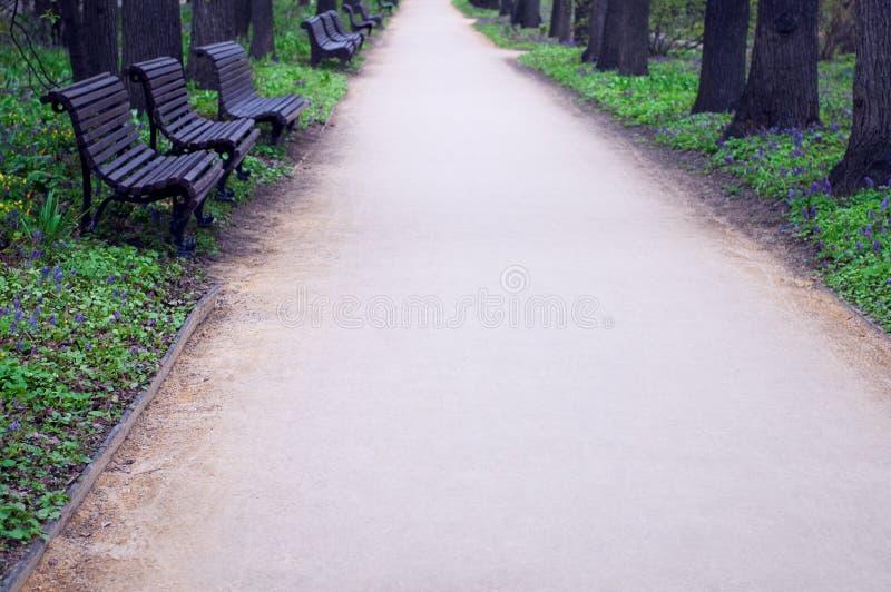 Aleia quieta do parque com bancos de madeira fotografia de stock royalty free