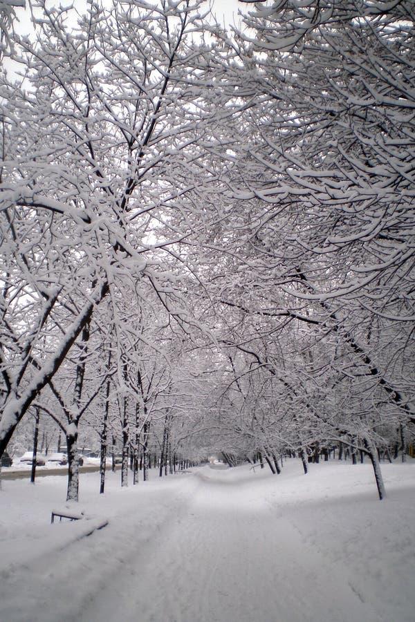 aleja śnieg zdjęcia stock