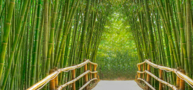 aleja bambus zdjęcie stock