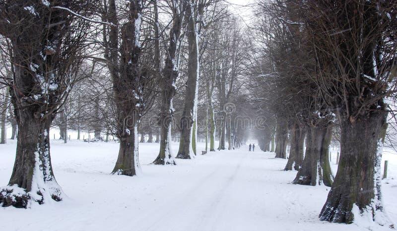 Aleja drzewa w śniegu obrazy stock