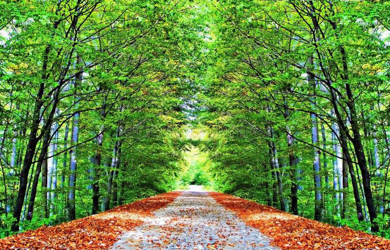 Download Aleja jesienna obraz stock. Obraz złożonej z droga, piękny - 10743803