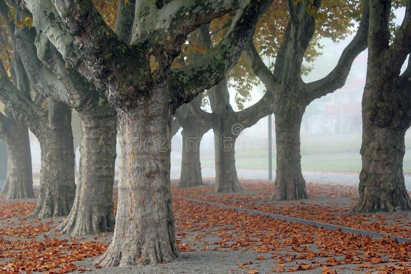 Aleja Londyński Plantrees fotografia stock