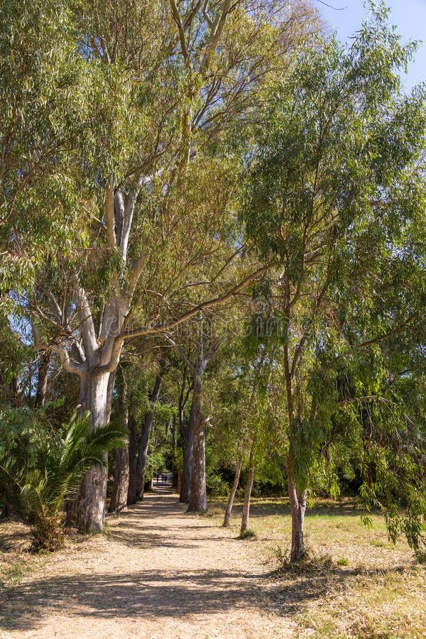 Aleja płascy drzewa w Butrint parku narodowym zdjęcia royalty free