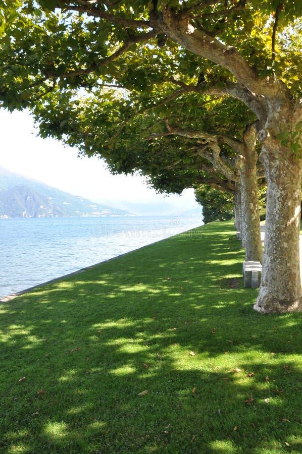 Aleja płascy drzewa wzdłuż jeziornego brzeg obraz stock