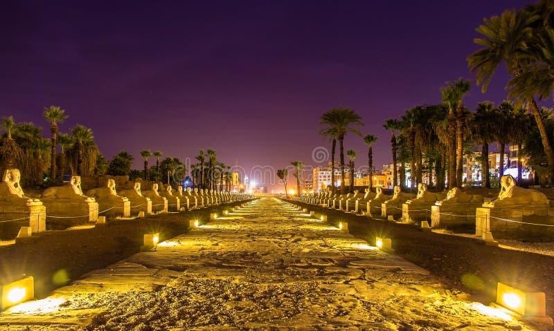 Aleja sfinksy w Luxor obraz royalty free