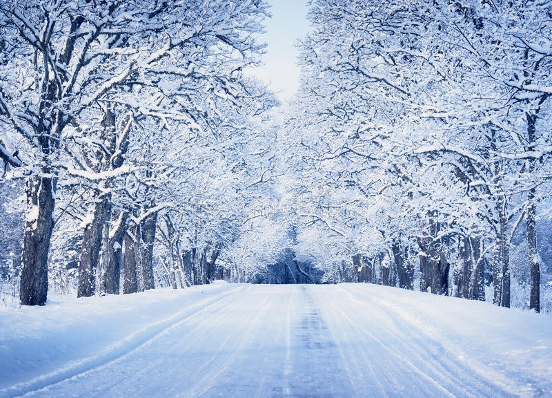 Aleja w śnieżnym ranku obraz stock