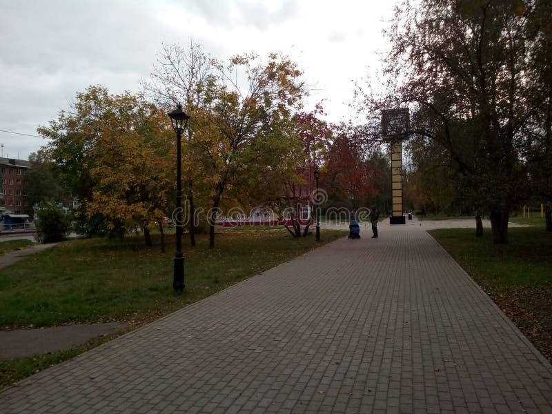 Aleja w jesieni obraz royalty free