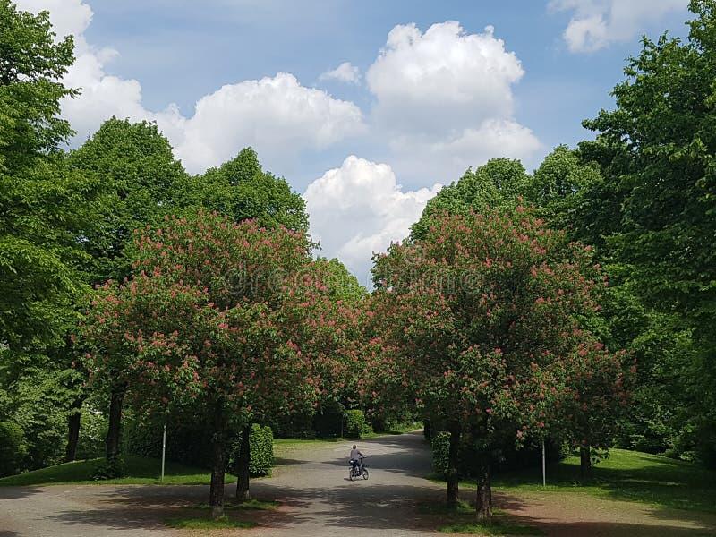 Aleja w parku z chmurnym niebem fotografia royalty free