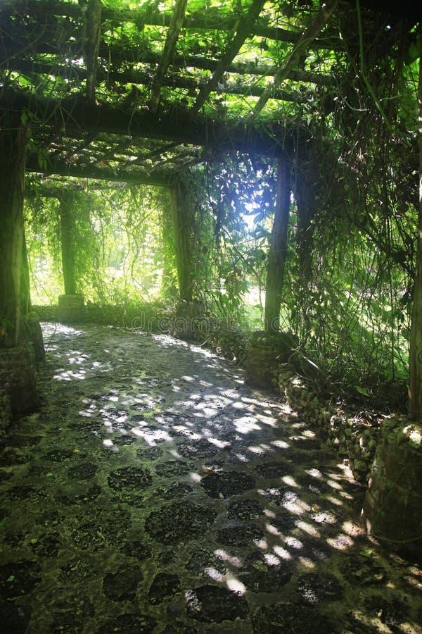 Aleja w roślinach obraz royalty free