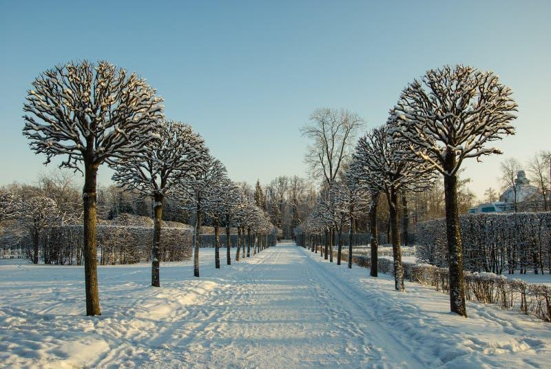 Aleja w zima parku fotografia royalty free