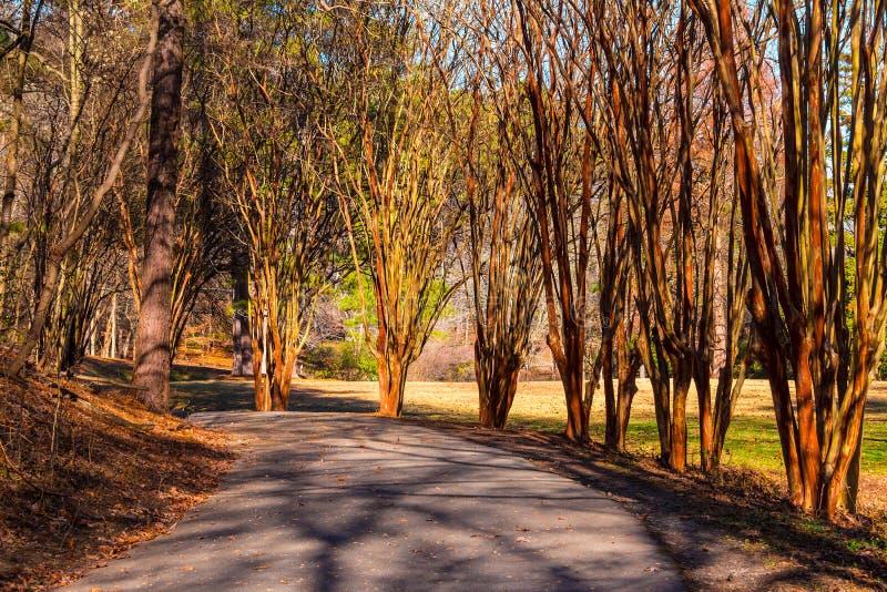 Aleja z eukaliptusowymi drzewami w Lullwater parku, Atlanta, usa zdjęcia royalty free