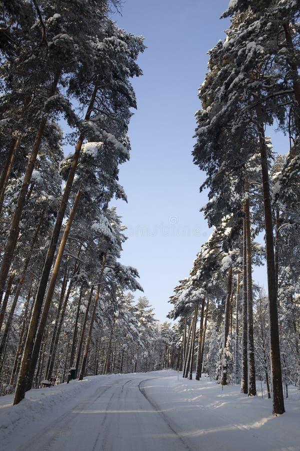 aleja zakrywający śnieg zdjęcie stock
