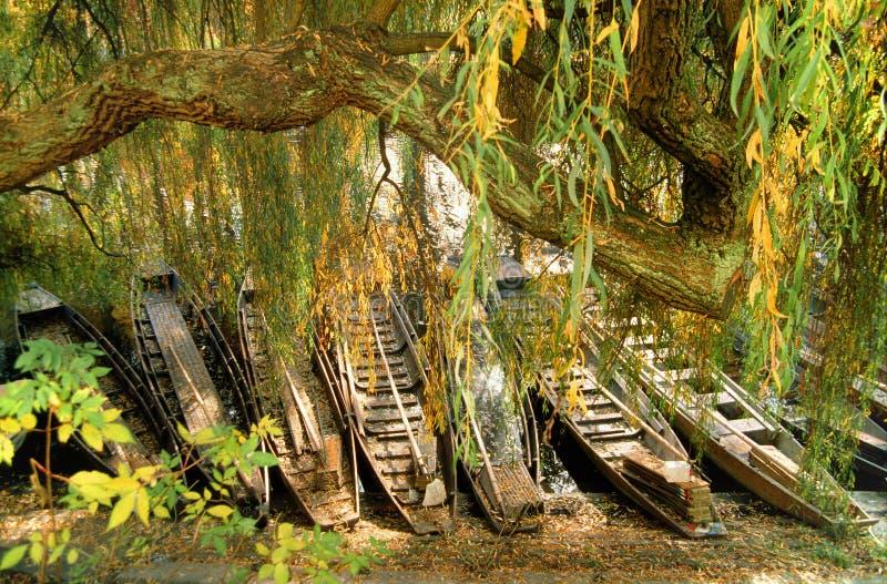Alemanha: Pontas no rio Neckar atrás de Weeping Willow fotos de stock