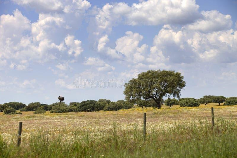 Alentejo farm royalty free stock photography