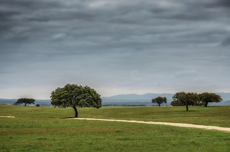 Alentejo landskap royaltyfria bilder