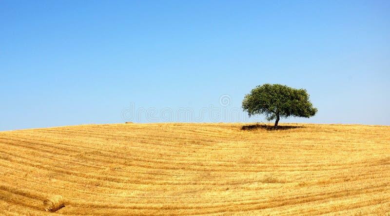 Alentejo, Portogallo. immagine stock