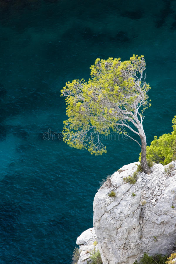 Free Aleppo Pine, Calanques Royalty Free Stock Photography - 10039117