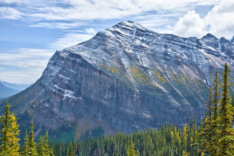 Alerces amarillos en otoño sobre Lake Louise en el parque nacional de Banff, Alberta fotos de archivo libres de regalías