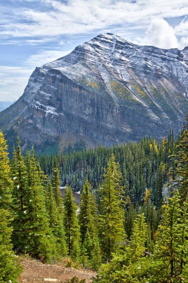 Alerces amarillos en otoño sobre Lake Louise en el parque nacional de Banff, Alberta imagen de archivo libre de regalías