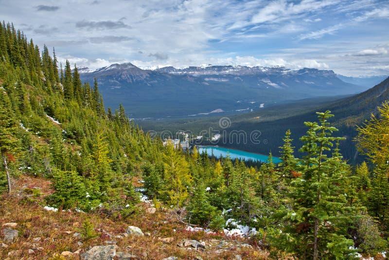 Alerces amarillos en otoño sobre Lake Louise en el parque nacional de Banff, Alberta fotos de archivo