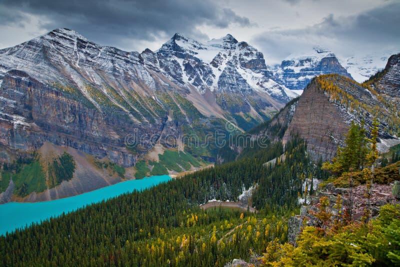 Alerces amarillos en otoño sobre Lake Louise en el parque nacional de Banff, Alberta fotografía de archivo libre de regalías