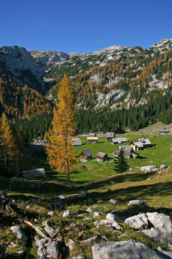 Alerces del otoño de Triglav NP y casas de madera imagen de archivo libre de regalías