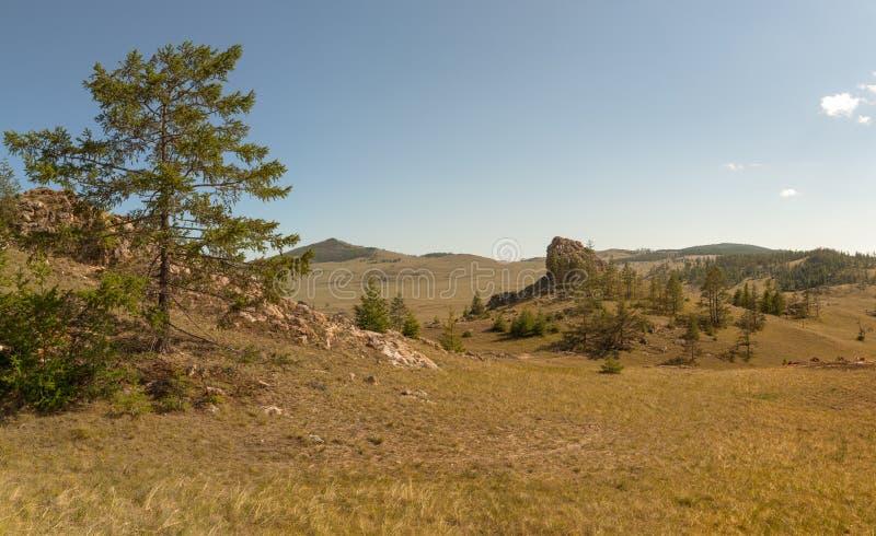 Alerces en un valle de la montaña. Montañas de Sayan del este. imagen de archivo