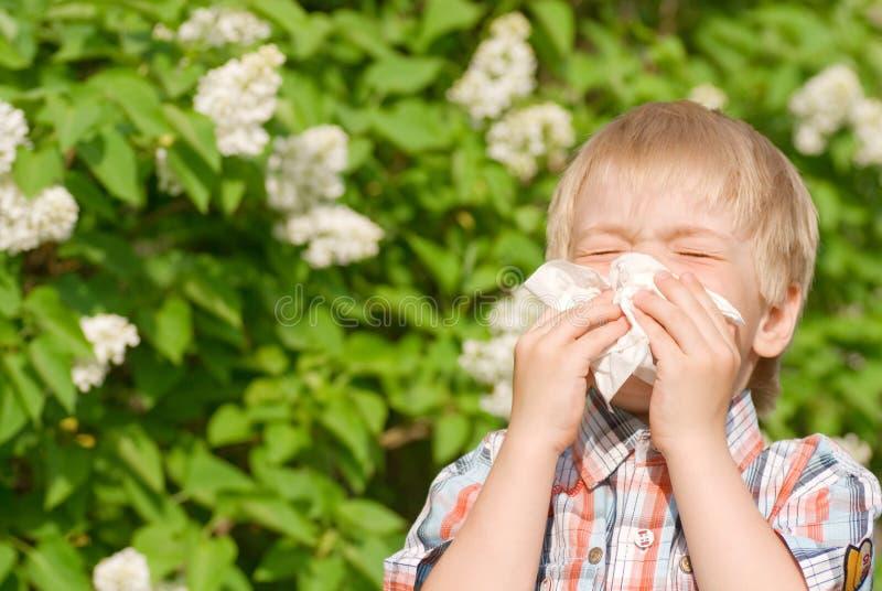 alergia obrazy stock