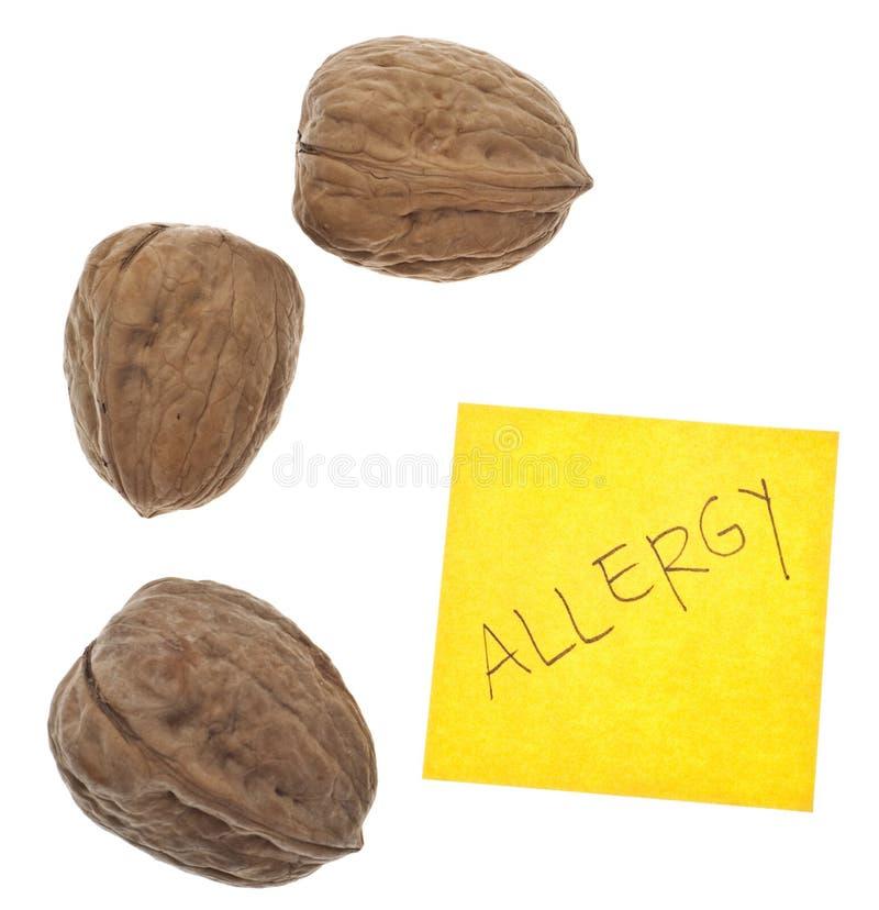 Alergia de la nuez fotografía de archivo