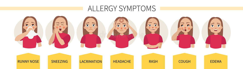 Alergia infographic Vetor ilustração stock