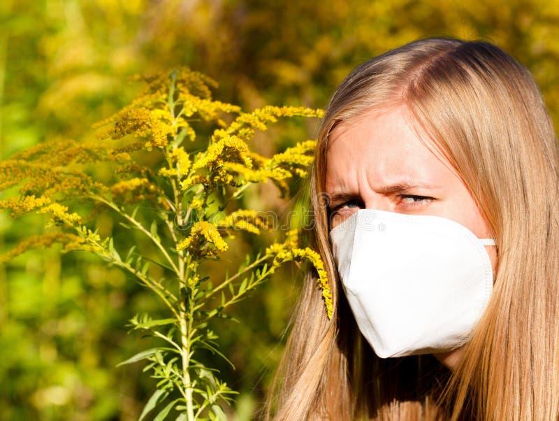 Alergia insoportable del Ragweed imágenes de archivo libres de regalías