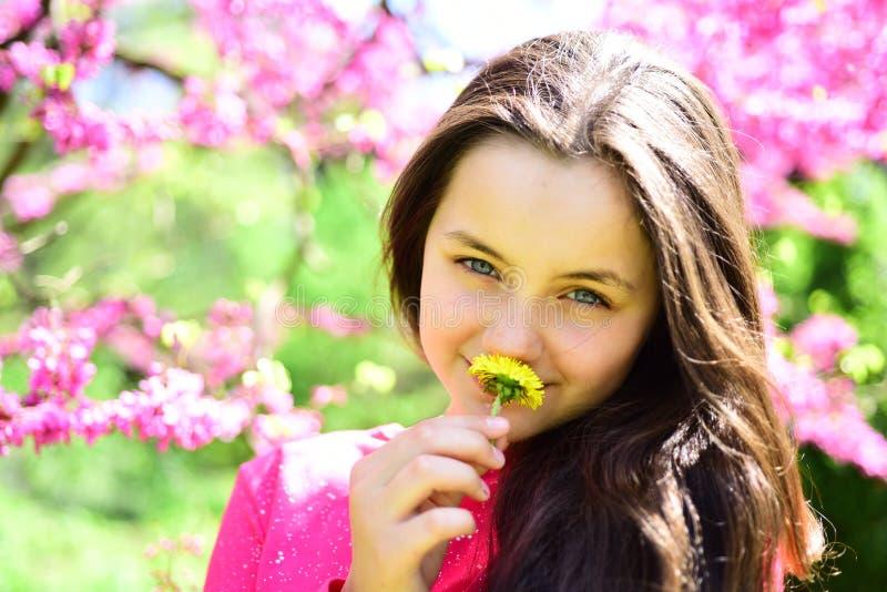 Alergia sezon Ładny dziewczyna odoru stokrotki kwiat w kwitnienie ogródzie Młoda dama z dandelion przy kwiatonośnym drzewem ślicz zdjęcie royalty free