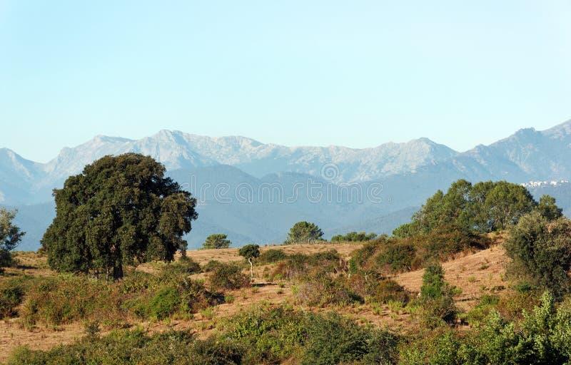 Aleria平原在可西嘉岛海岛 库存图片