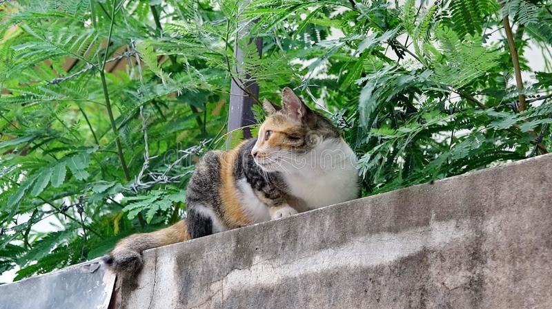 Calico cat on a wall stock photo