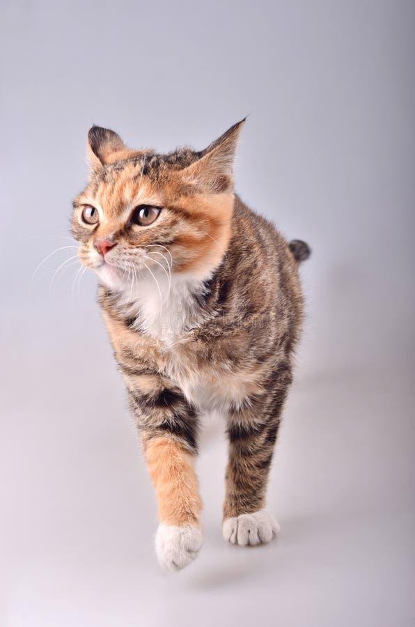 Alert cat royalty free stock photos