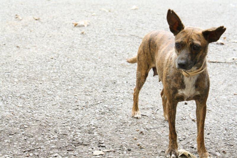 alert hund royaltyfri foto