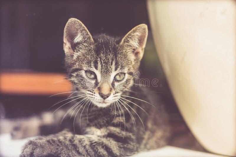 Alert kitten peering through glass stock images