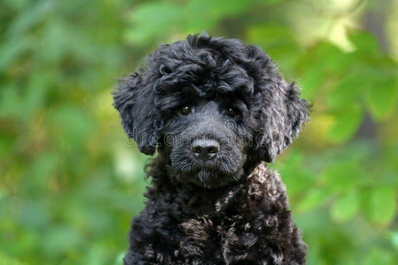 Alert Little Black Puppy Outdoors obraz royalty free