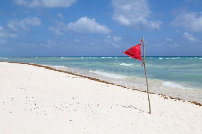 Alerte sur la plage tropicale images stock